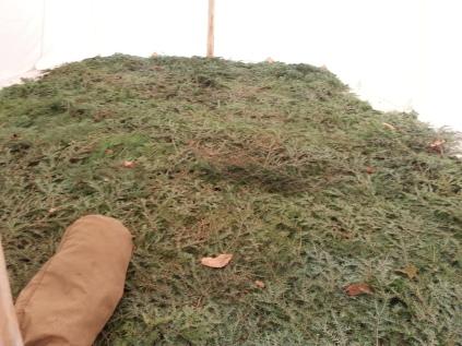 Pine Floor in the Wall Tent
